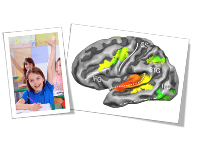 Reading and the Brain